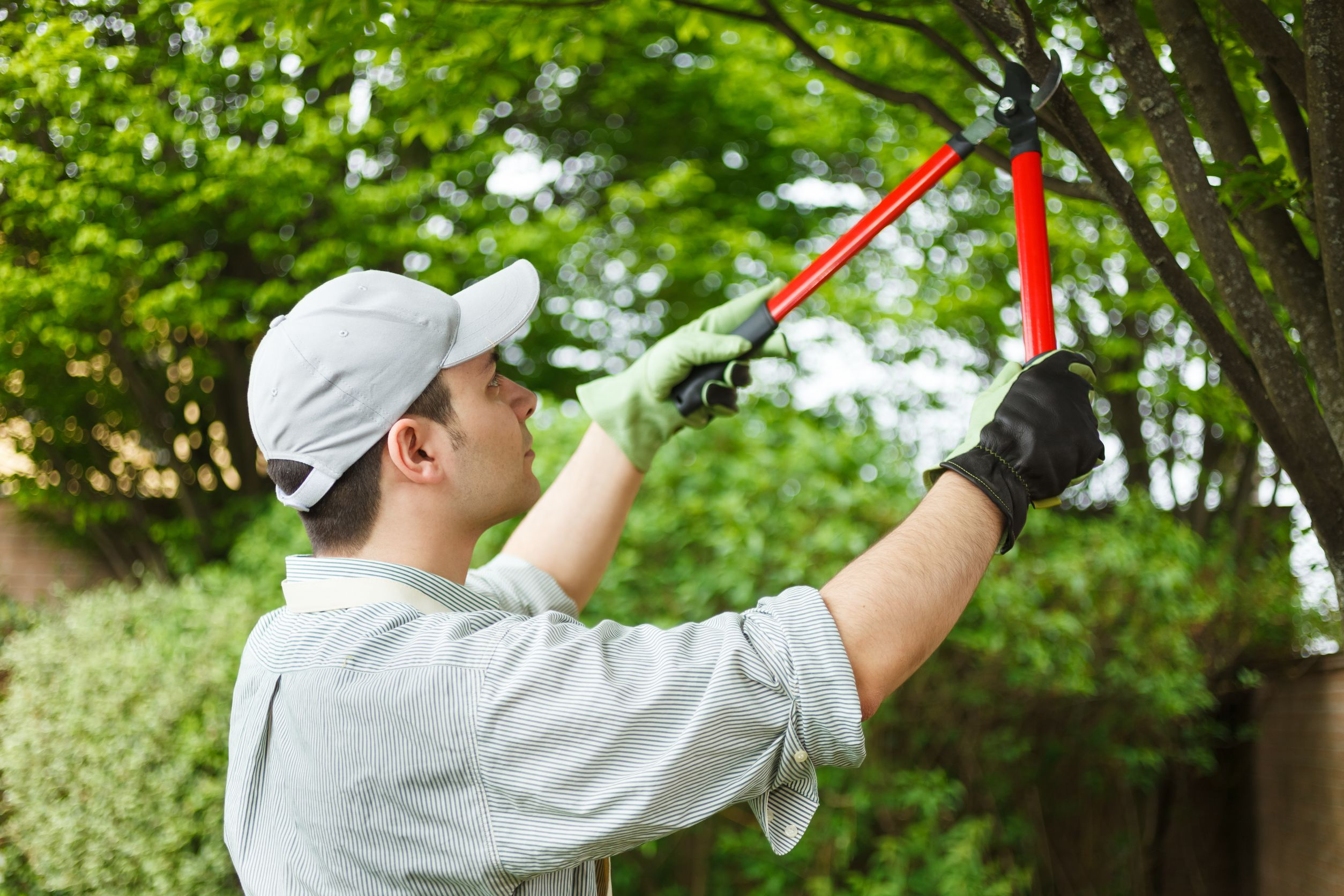 Five types of tree pruning acer landscape services for Gardening and landscaping services