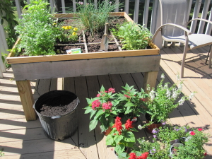 square foot gardening in nashville, Tennessee