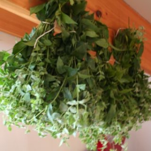 drying flowers and herbs in middle tennessee and nasahville