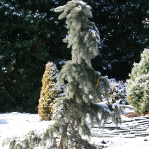 preparing you garden for winter in nashville and middle tennessee