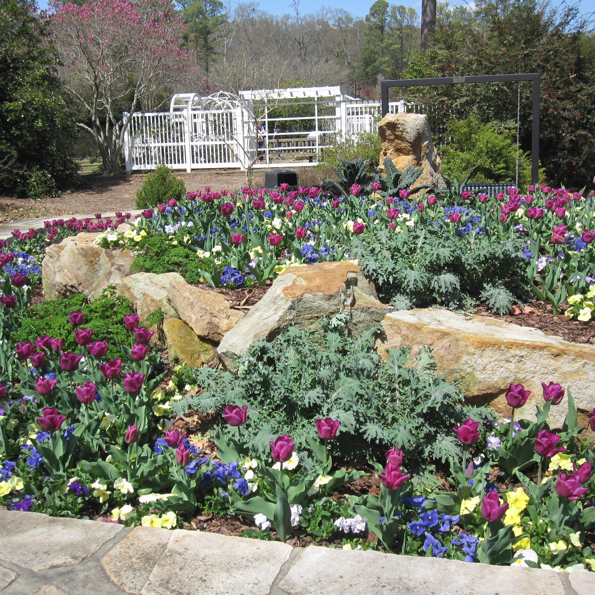 Learn how planting annuals can transform your landscape in tennessee gardening in mid south nashville full sun annuals izmirmasajfo