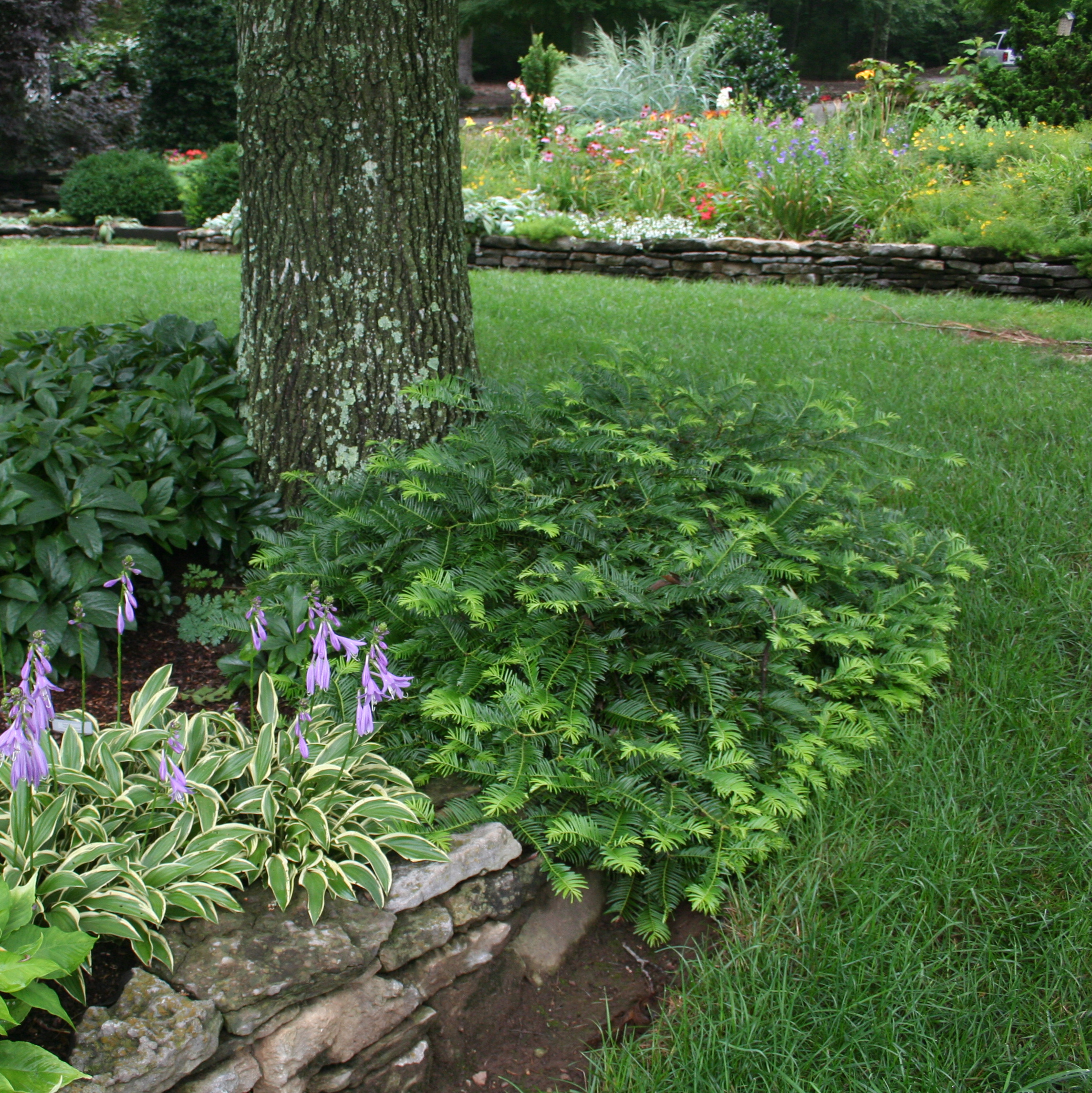 Nashville Tennessee Shade Perennial Beds Acer Landscape Services